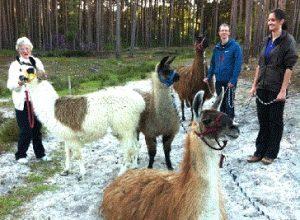 Surrey Hills Llamas